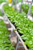 Stads- jordbruk, stads- lantbruk eller stads- arbeta i trädgården Arkivbild