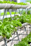Stads- jordbruk, stads- lantbruk eller stads- arbeta i trädgården Royaltyfri Foto