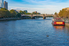 Stads- landskap med floden och den svarta svanen Fotografering för Bildbyråer