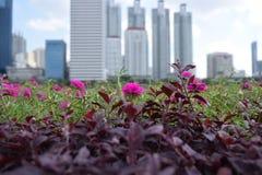 Stads- natur Royaltyfria Foton
