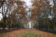 Stads- parkera med central gräsmatta som flankeras av högväxta gula träd, gångbanor och stupade sidor på jordning i höst royaltyfri bild