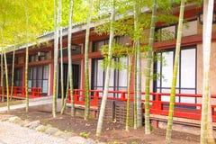 Stads- plantera för bambu i Tokyo, Japan Royaltyfria Foton