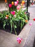 Stads- rosa och gröna blommor royaltyfria bilder