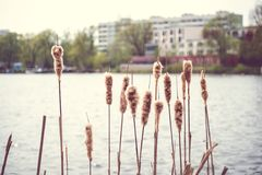 Stads- sjölandskap Royaltyfria Bilder