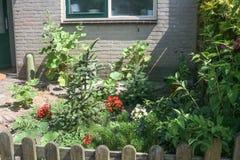 Stads- trädgård i Nederländerna med stockrons, spansk gran, barrträd och röda begoniablommor royaltyfria foton