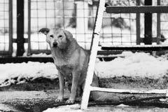 Stads- vinterplats med den härliga hunden i snön Arkivfoton