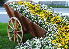Stadsdesign - vit- och gulingförälskelse-i-gagnlöshet blommor Royaltyfria Foton