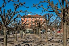 Stadsfyrkant med många beskar träd och byggande tidig vår Royaltyfria Foton