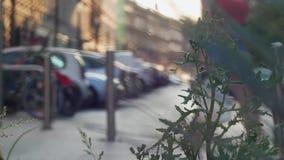 Stadsgata i defocus Varm luft från asfalten Onormal värme i Europa lager videofilmer