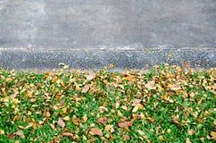 Stadsgräsplanen parkerar Royaltyfria Bilder