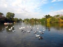 Stadshöstnatur och fåglar i sjön Fotografering för Bildbyråer