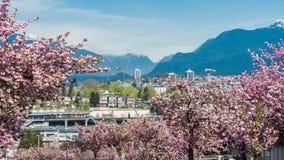 Stadslandskap för körsbärsröd blomning Fotografering för Bildbyråer
