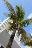stadsmiami palmträd Royaltyfria Foton
