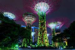 stadsnatt singapore Arkivbild