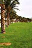 stadspark Royaltyfri Bild