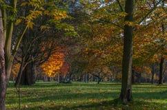 Stadspark in de herfst Royalty-vrije Stock Afbeelding