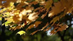 Stadspark in de herfst stock video