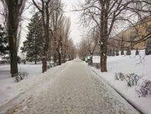 stadspark långt övervintrar trees för snow för sky för lies för frost för mörk dag för bluefilialer Snow och trees Royaltyfria Foton