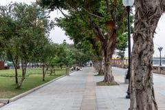 Stadspark met een groen gazon Groene bomen en struiken op het gazon stock afbeelding