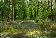 Stadspark na natuurlijke ramp Dalende boom en takken na natuurramp Stadspark na catastrofe Ramp in spri royalty-vrije stock fotografie