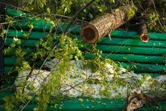Stadspark na natuurlijke ramp Dalende boom en takken na natuurramp Stadspark na catastrofe Ramp in spri stock afbeelding