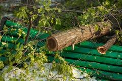 Stadspark na natuurlijke ramp Dalende boom en takken na natuurramp Stadspark na catastrofe Ramp in spri stock fotografie