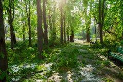 Stadspark na natuurlijke ramp Dalende boom en takken na natuurramp Stadspark na catastrofe Ramp in spri stock foto's