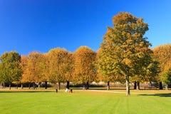Stadspark och tree Royaltyfria Bilder