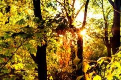 Stadspark, zonnestraal door de bomen Kiev, de Oekraïne, exemplaarruimte stock foto's