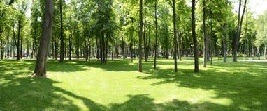 Stadssommar parkerar Grön gränd för stad Arkivbilder
