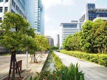 Stadsträd arkivfoton