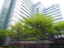 Stadsträd arkivbild