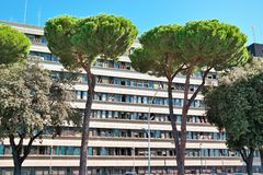 Stadsträd Rome EUR Arkivbilder