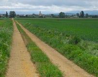 Stadsweg tussen gebieden van graangewas stock foto's