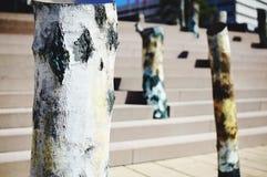 Stadt-Baum-Stamm Stockbilder