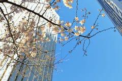 Stadt-Blüte Stockfoto