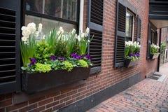 Stadt-Fenster-Garten stockfotos