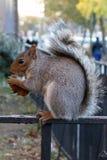 Stadt Harlem Bronx Eichhörnchen-New York USA lizenzfreie stockbilder