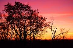 Stadt im Sonnenuntergang Stockbild
