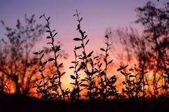 Stadt im Sonnenuntergang Stockfotografie