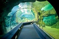 Stadt Oceanarium Stadt von Sochi, Adler Microdistrict innen Stockfoto