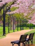 Stadt-Park Stockbild