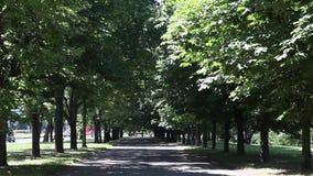 Stadt-Park, Hochsommer stock video footage