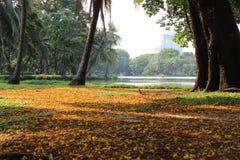 Stadt-Park mit gefallenen Blumen auf grünem Gras und warmem Sonnenschein Lizenzfreie Stockfotografie