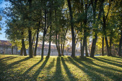 Stadt-Park, Ruhe und Einsamkeit, Bäume, Sonnenschein, gelbes Laub in Prag im Herbst Lizenzfreies Stockfoto