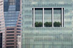 Stadtbäume Lizenzfreie Stockfotografie