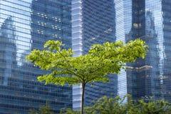 Stadtbaum Stockfoto