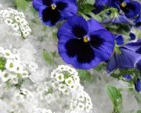 Stadtblumen Stockbild