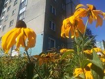 Stadtblumen stockfotos