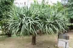 Stadtgärten - tropische Anlagen stockbild
